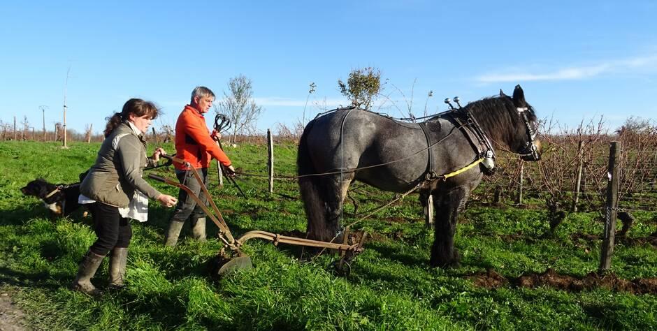 Vaudelnay. Le cheval apporte une aide précieuse