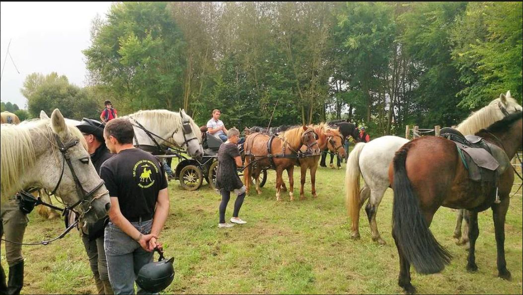 Courcebœufs. L'association Rando, Nature et Galop veille sur les chemins des cavaliers et marcheurs