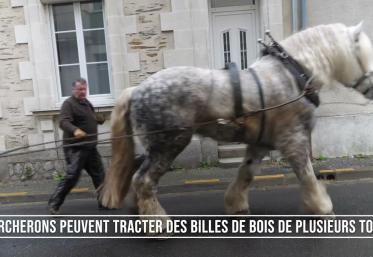 Angers: Chantier de débardage à cheval en ville