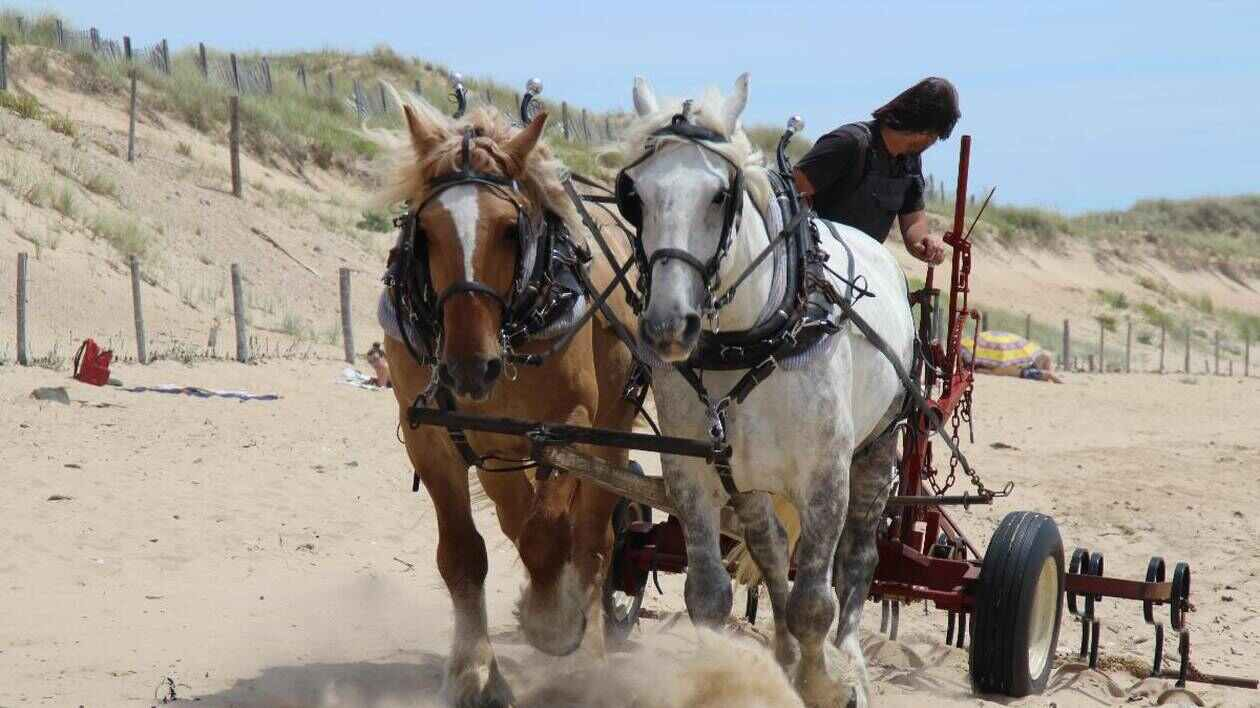 QUIZ VRAI-FAUX. Connaissez-vous la collecte des déchets à cheval à Saint-Gilles-Croix-de-Vie ?