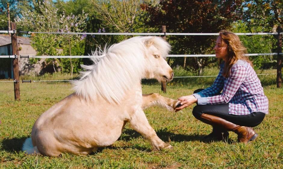 Animations autour du cheval au Clos des Anges