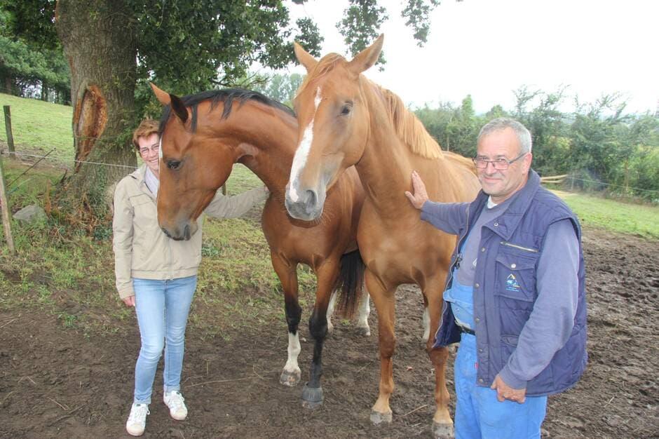 Les Herbiers. L'élevage de chevaux des Peux veut franchir les obstacles