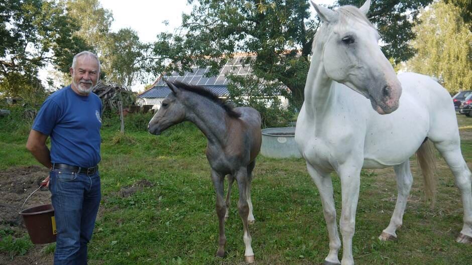 « Le cheval, une histoire de famille »… Denis Crochet, un Challandais aux petits soins de ses bêtes