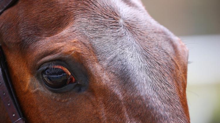Les contours de la loi visant à renforcer la lutte contre les maltraitances animales s'affinent