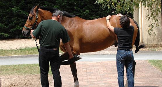 Communiquer et vendre mon service autour du cheval