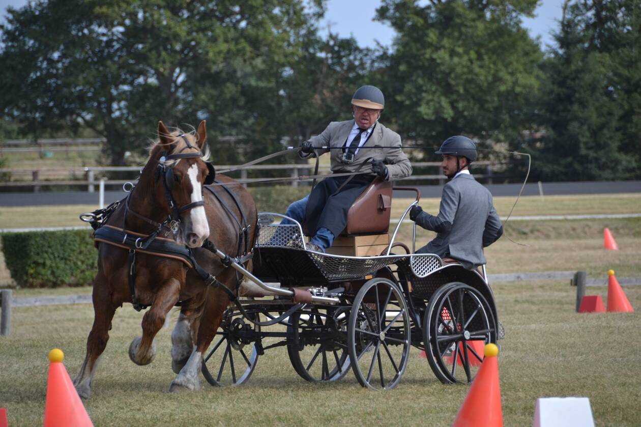 Attelage : les meilleurs chevaux français ont commencé à s'affronter à Meslay-du-Maine