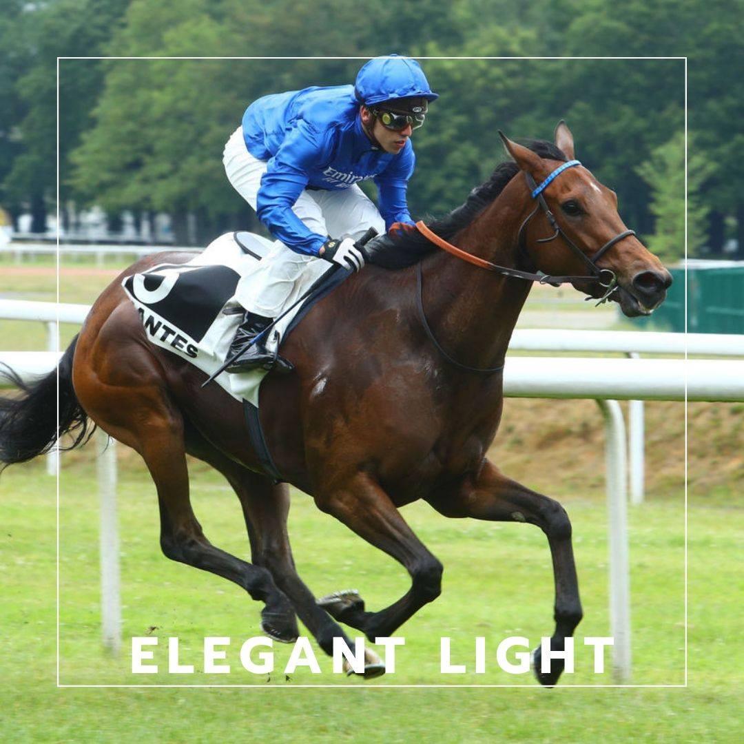Elegant Light en cavalier seul